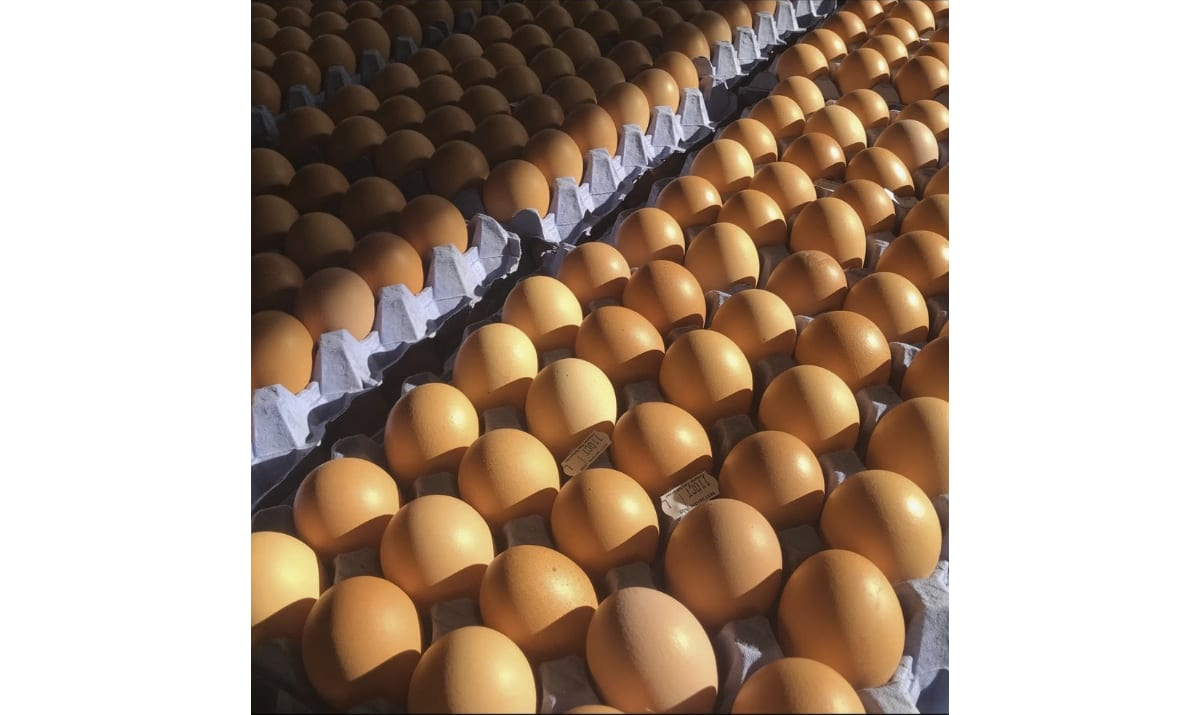 eggs from fluffets