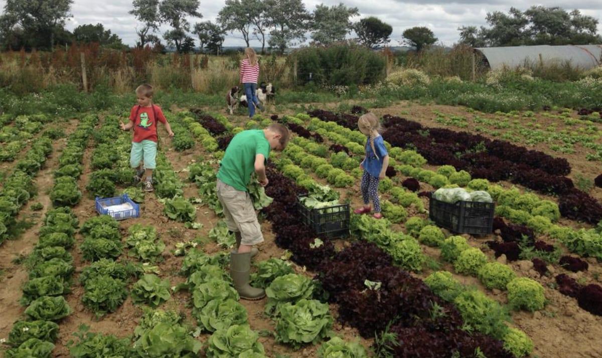 children helping sow crops